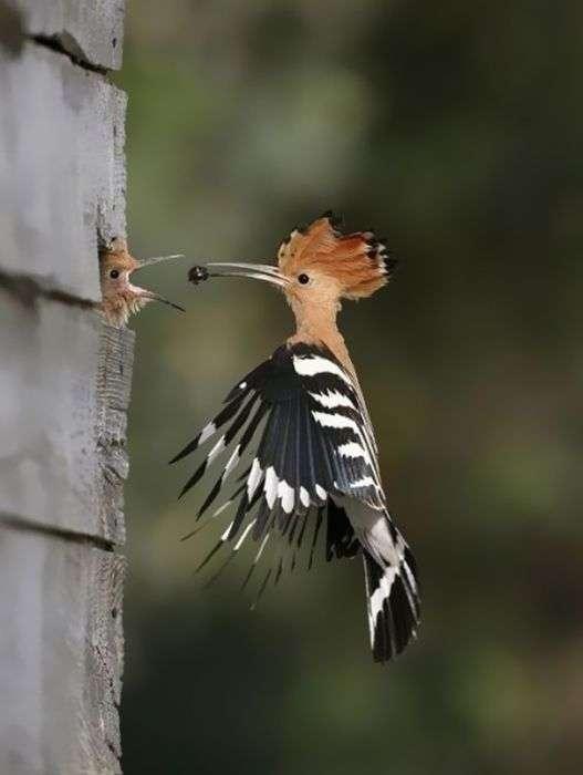 Фотографії тварин, зроблені в потрібний момент. Частина 2 (50 фото)