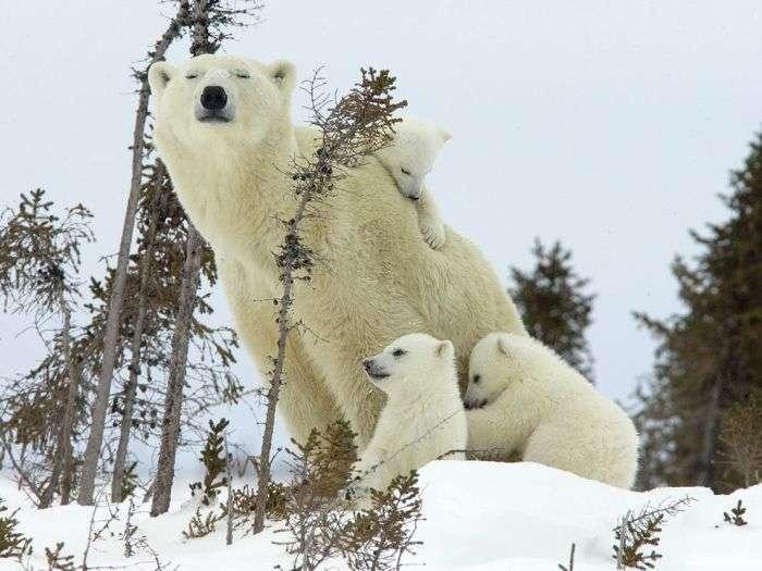 Дитинчата тварин і їх мами (40 фото)