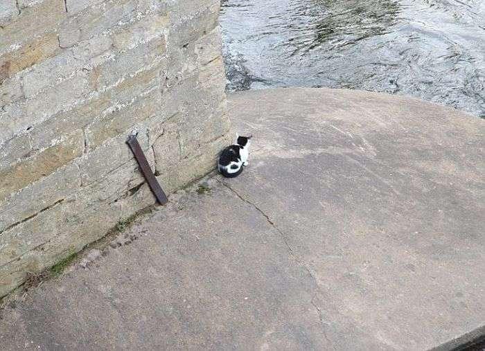 Порятунок бродячої кішки (7 фото)