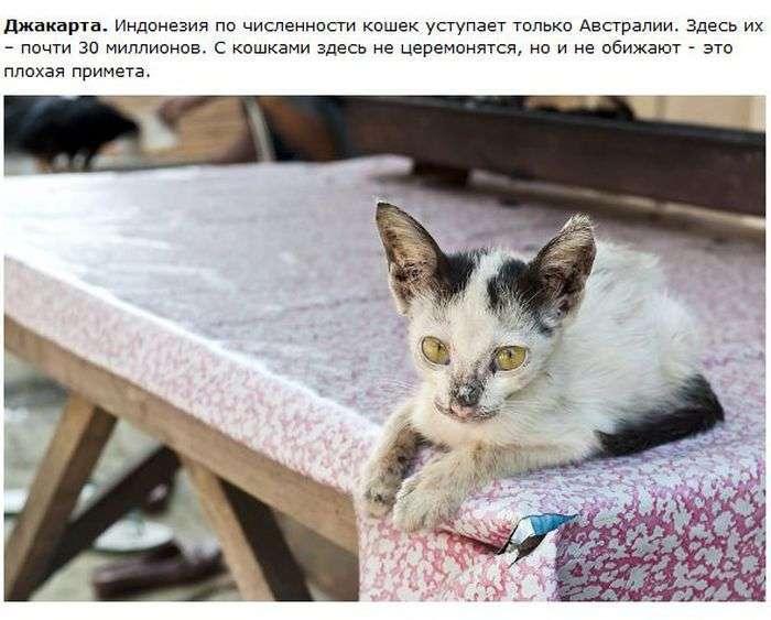 Про кішок в різних містах (28 фото)
