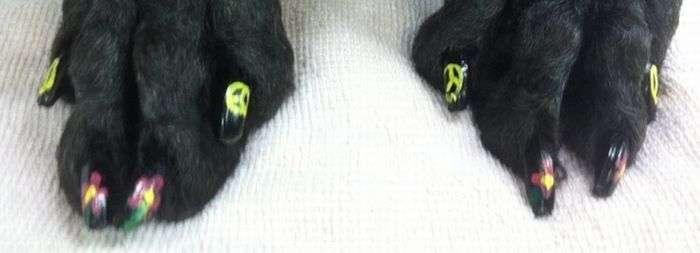 Собачий манікюр (27 фото)