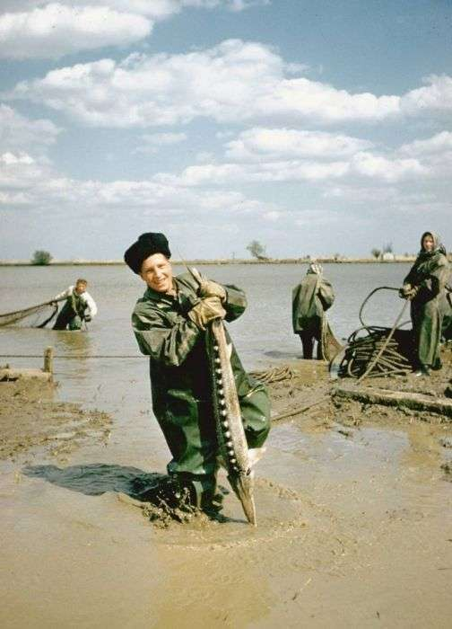 Видобуток чорної ікри у другій половині XX століття (20 фото)