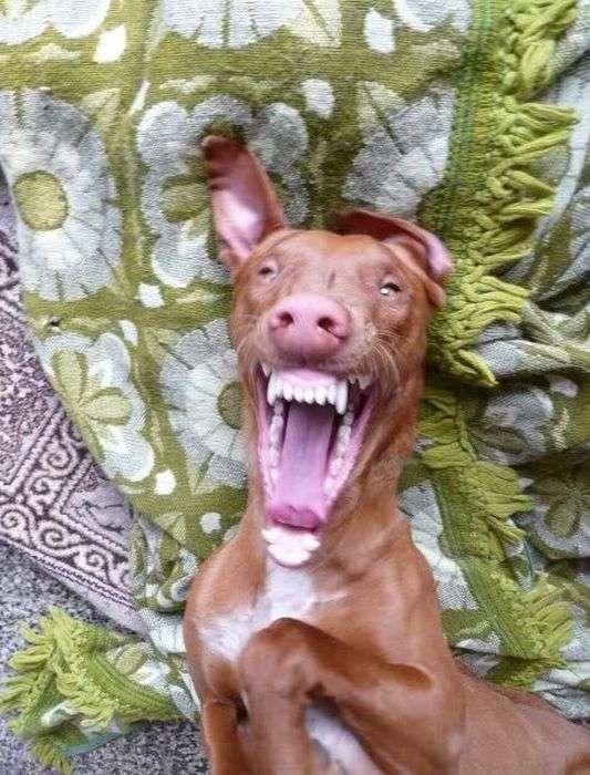 Смішні собаки (110 фото)