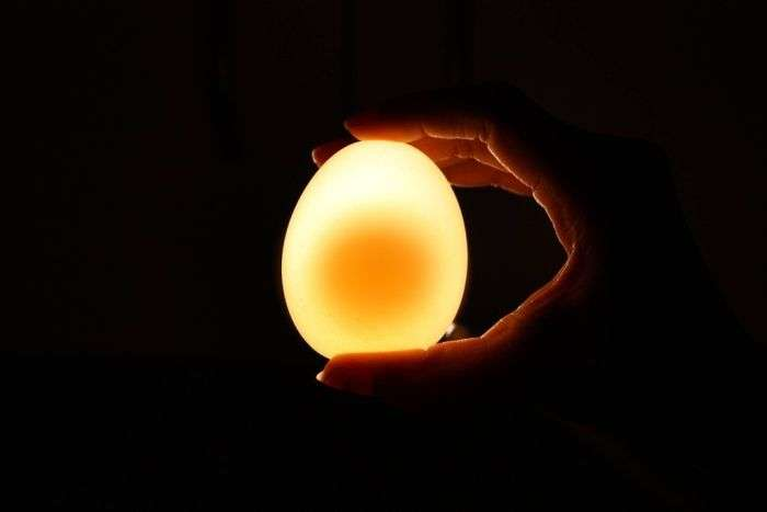 Яйце в оцтовій кислоті (12 фото)