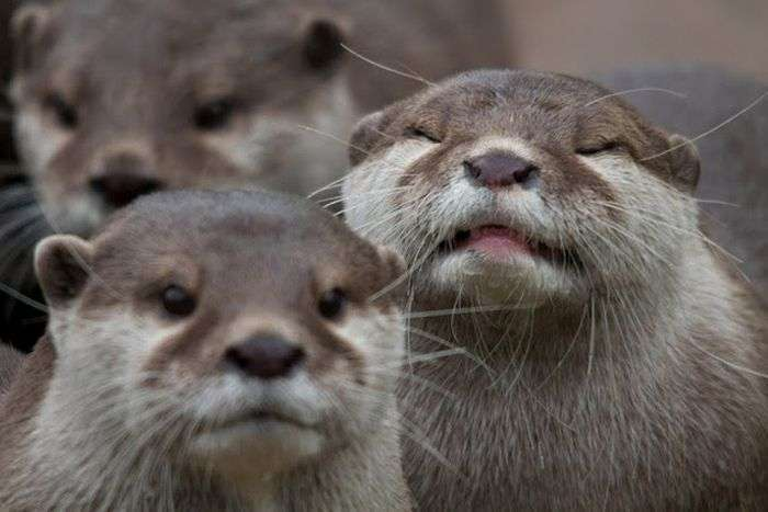 Тварини фотобомбы (35 фото)