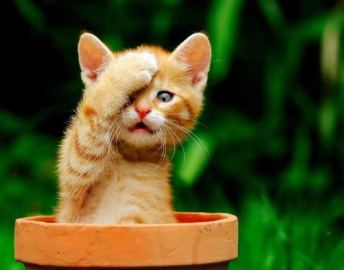 Славні кошенята (100 фото)