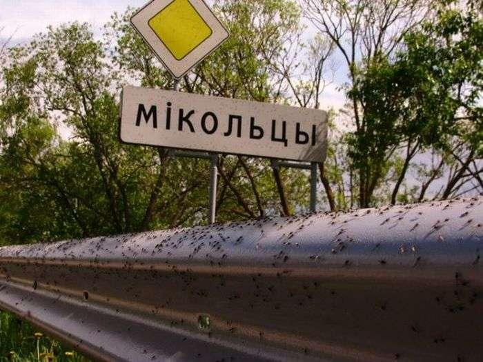 Мінську область атакували комарі (18 фото)