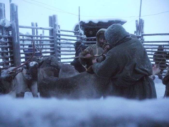 Один день серед пастухів-стадніков (87 фото)