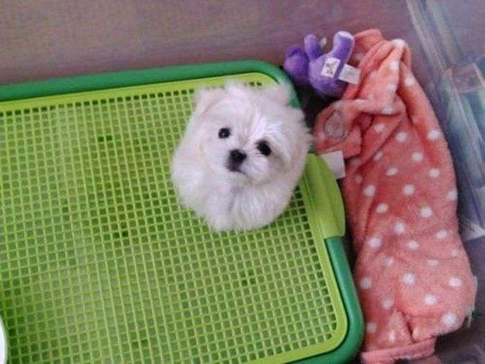 Милий пес (8 фото)