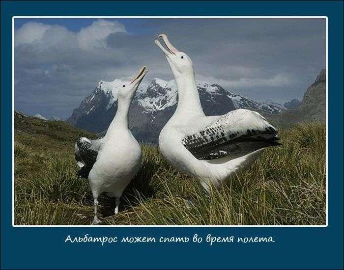 Про сон тварин (10 фото)