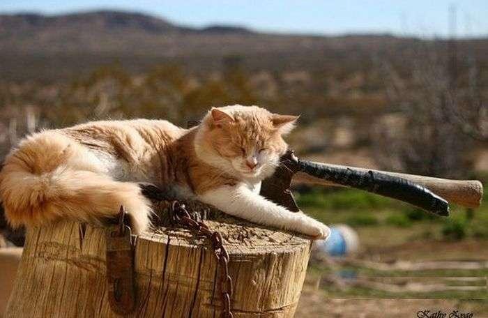 Сплять коти (35 фото)