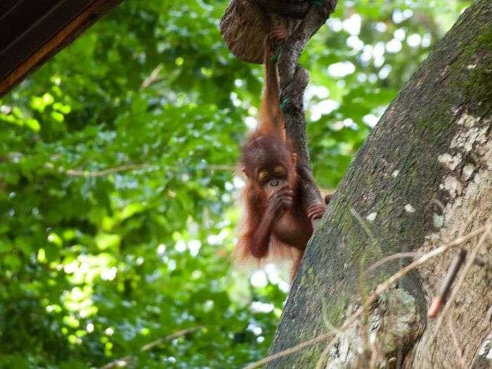 Тварини, які тримають лапу у роті (25 фото)