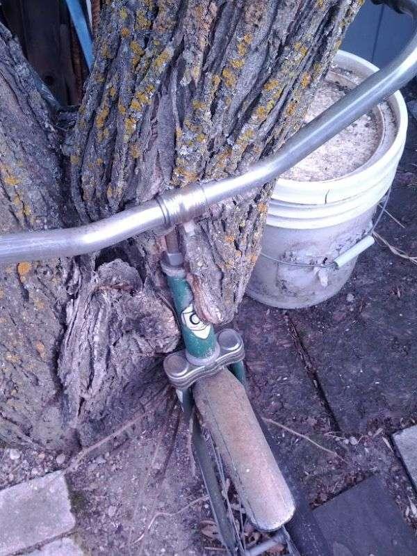 Дерево і велосипед (7 фото)