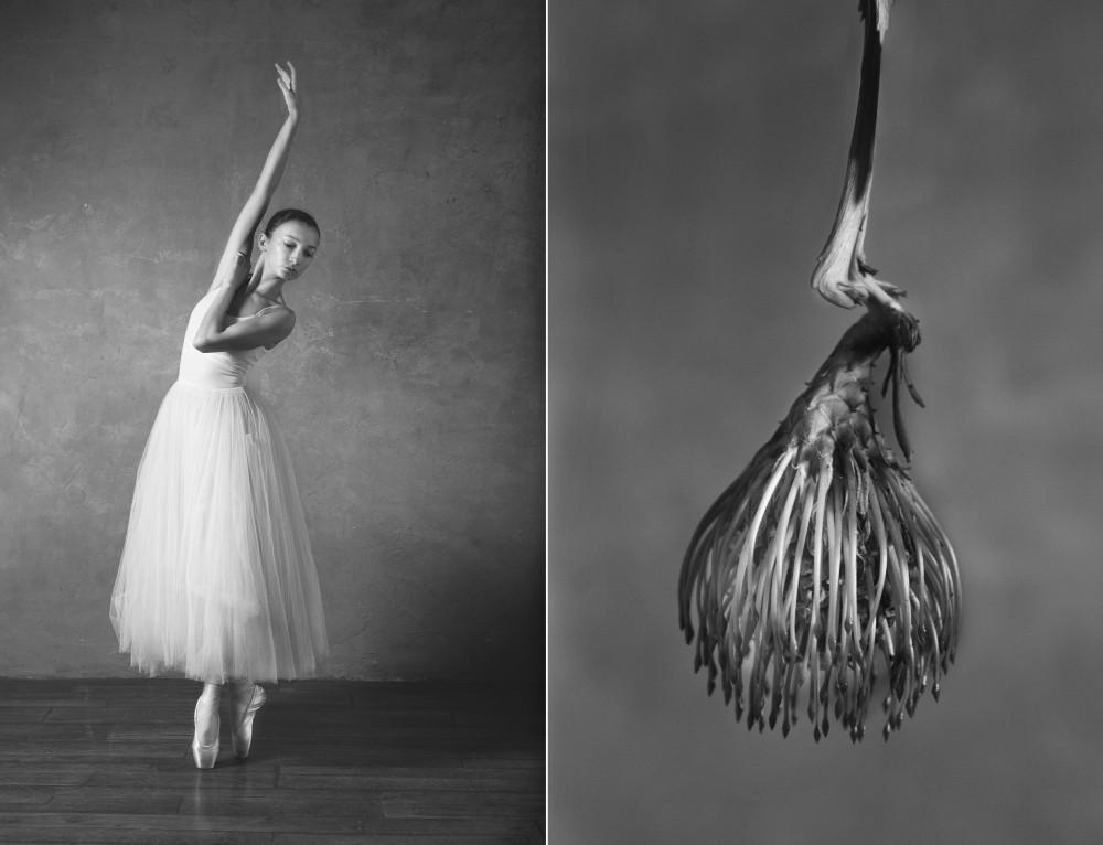 Балерина и цветы: фотосерия о сходстве двух изяществ Культура и искусство