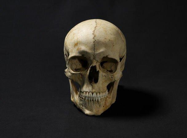 Учёный восстановил внешность человека, жившего 1300 лет назад Наука