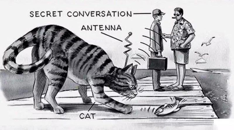 «Акустические кошечки» — команда кошек-шпионов, подготовленная ЦРУ Интересное