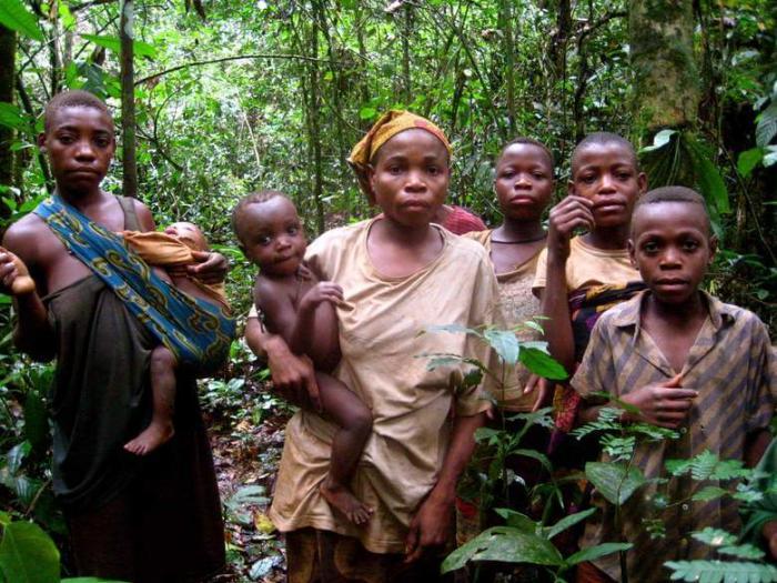 Гигантский паук Джейба Фофи: Загадка лесов Конго Интересное