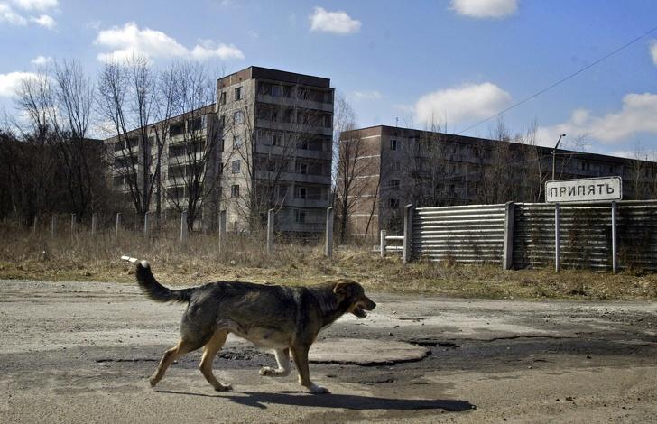 Посмотрите, какие звери живут в зоне отчуждения Чернобыля. Кажется, природа почти залечила раны, которые ей нанес человек Интересное