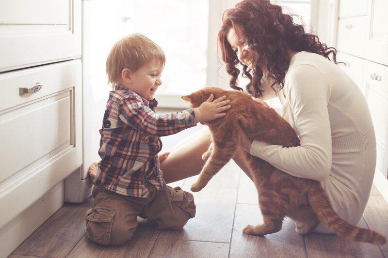Почему кошку первой пускают в новый дом? Интересное