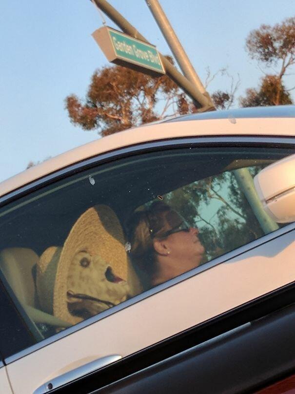 40 встреч на дороге, от которых у водителей округлялись глаза   Интересное