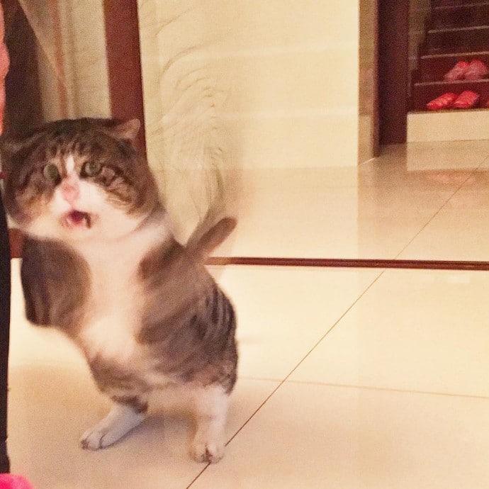Король драмы! 14 забавных фото сверх эмоционального кота Приколы,pin,коты,приколы,смешные коты