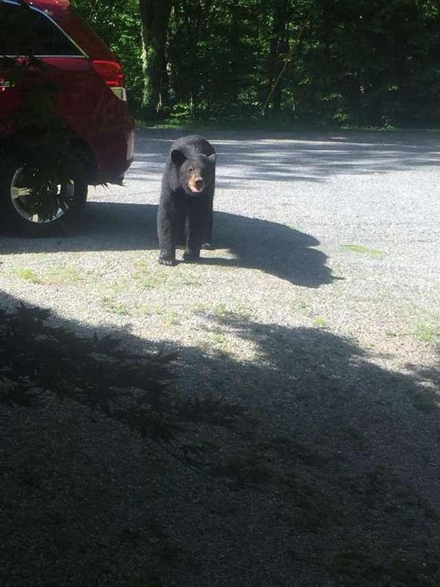 Мужчина оставил машину у леса, и медвежата преподали ему ценный урок