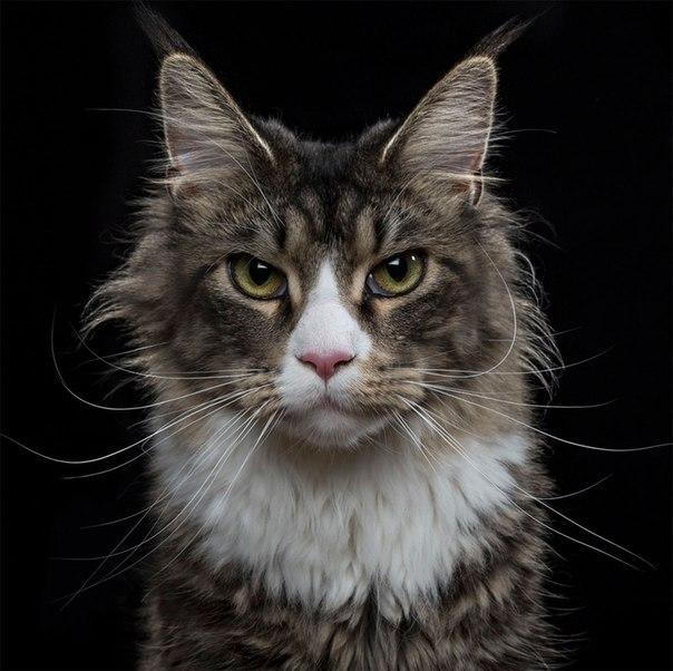 Чистосердечные портреты животных красивые фотографии,приколы,фото приколы
